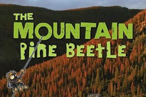 mountain pine beetle