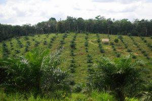 Palm Oil Deforestation. Credit: CIFOR, FlickrCC