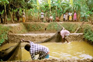 Sustainable Aquaculture in Malawi. Photo by WorldFish / Randall Brummett, 2002, FlickrCC
